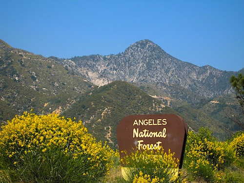 """Angeles National Forest"""